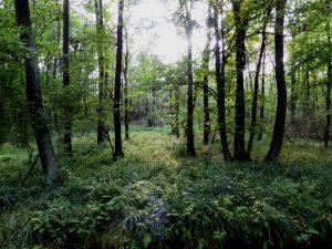 Waldlandschaften_Spreewald_P1040048